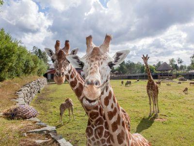 Dyreparken, Kristiansand Zoo og Amusement Park